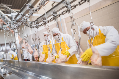 Group of workers in a poultry processing plant